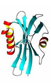 Tipos de proteínas: Estructura de las proteínas